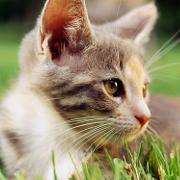 DOAF Cat Final 140528