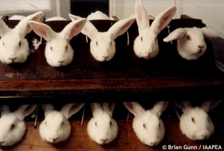 animal experimentation articles pros