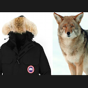 Animal Justice Files False Advertising Complaint Against Canada Goose