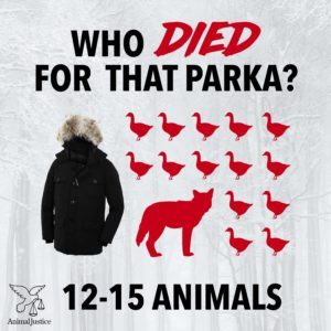 Animals killed for fur and down parka